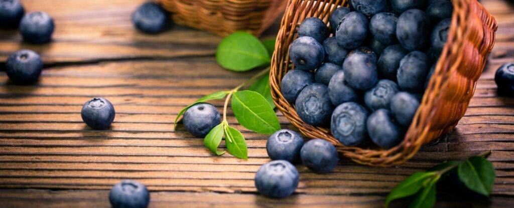 blueberries are a great food for alzheimers
